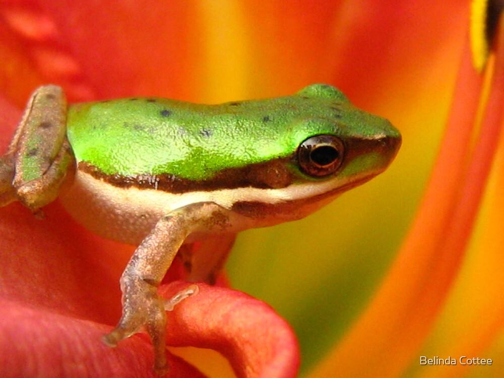 leap frog by Belinda Cottee