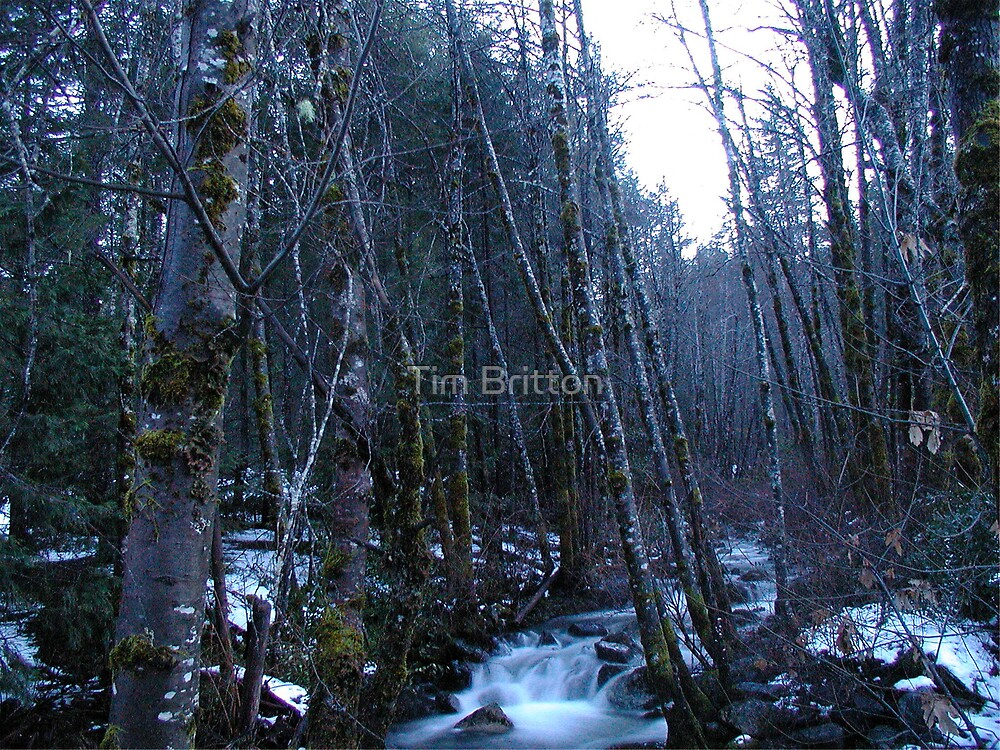 Clausen Creek through the woods by TimsWorld