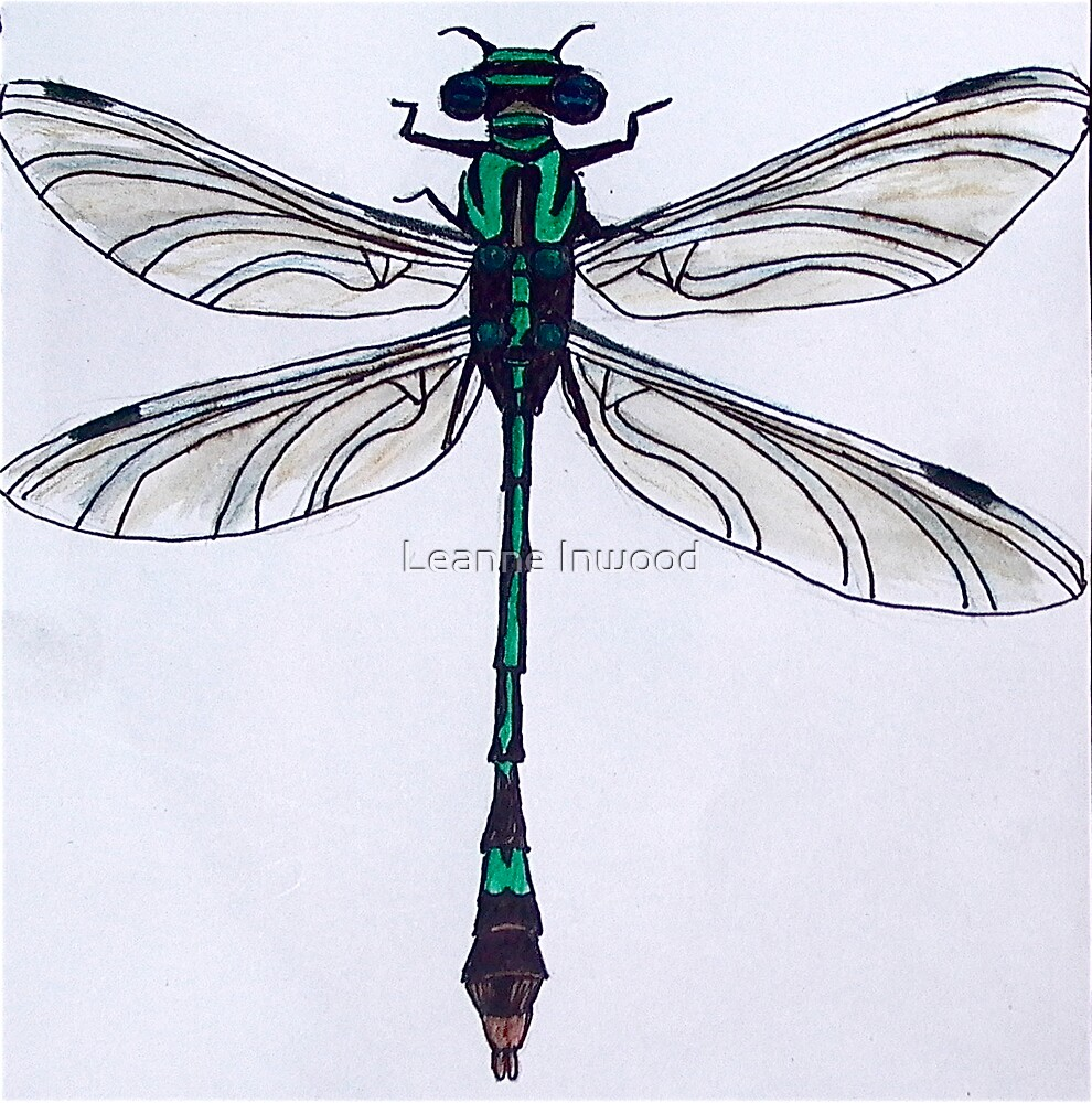 green dragonfly by Leanne Inwood