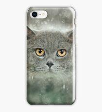Majestic British Shorthair (AKA British blue) cat on green pillow  iPhone Case/Skin