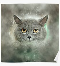Majestic British Shorthair (AKA British blue) cat on green pillow  Poster