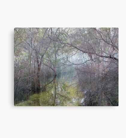 Amongst the reeds, Lake McKenzie Canvas Print