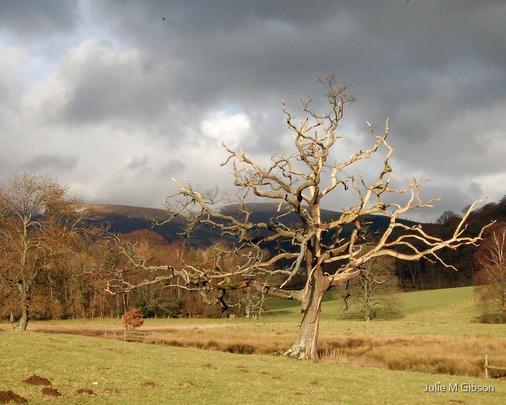 Old tree, Derwentwater by Julie M Gibson