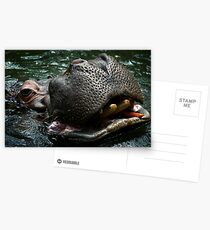 Hungry Hippo Postcards