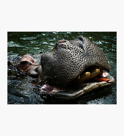 Hungry Hippo Photographic Print