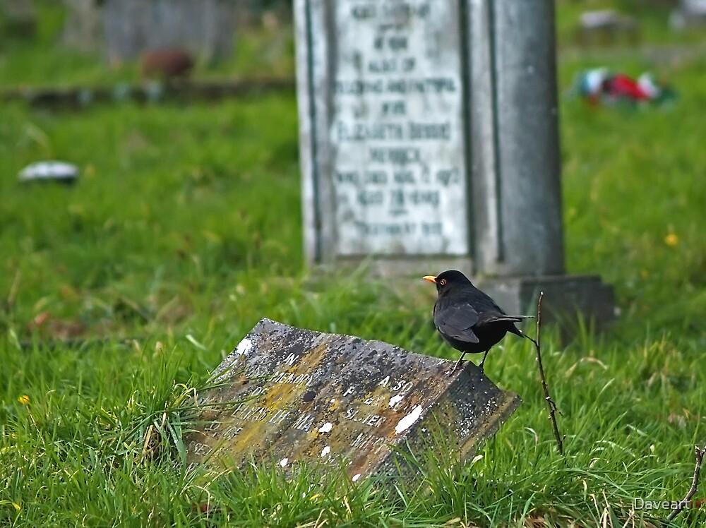 Blackbird in the graveyard by Daveart