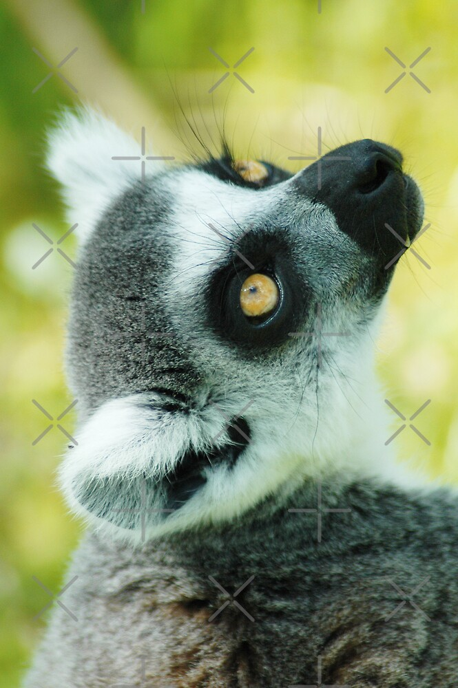 Lemur Photo - Close Up by Martine Carlsen