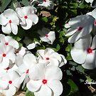 White Beauty   by Ilunia Felczer