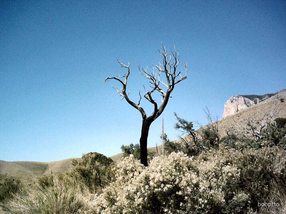 Dead Tree, Blue Sky by boopfto
