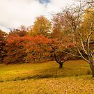 Autumnal by SusanAdey
