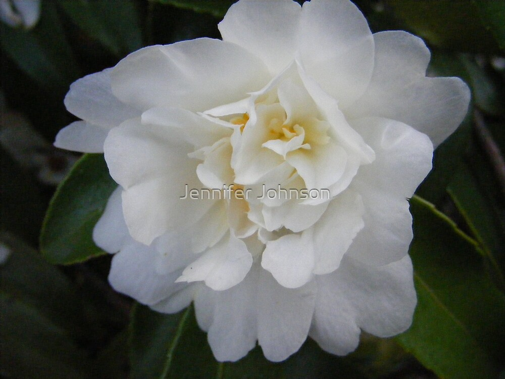 Flower by Jennifer Johnson