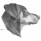 flop-ear doberman drawing by Mike Theuer