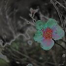 Rain Soaked Bloom by Jen Waltmon