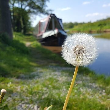 Dandelion and Narrowboat Scene by ckrocks007