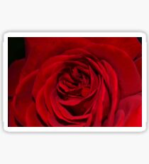 Crimson Red Rose Sticker