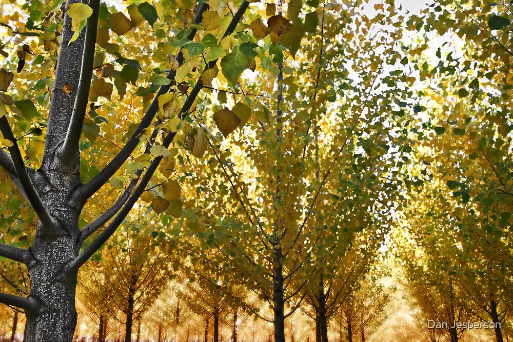 Autumn Glow by Dan Jesperson