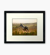 horse running gallop in sunset Framed Print