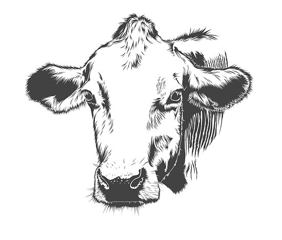 Vector Drawn Cow by Pet Forest