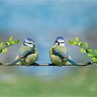 The Blue tits by M.S. Photography/Art