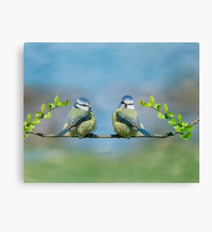 The Blue tits Canvas Print