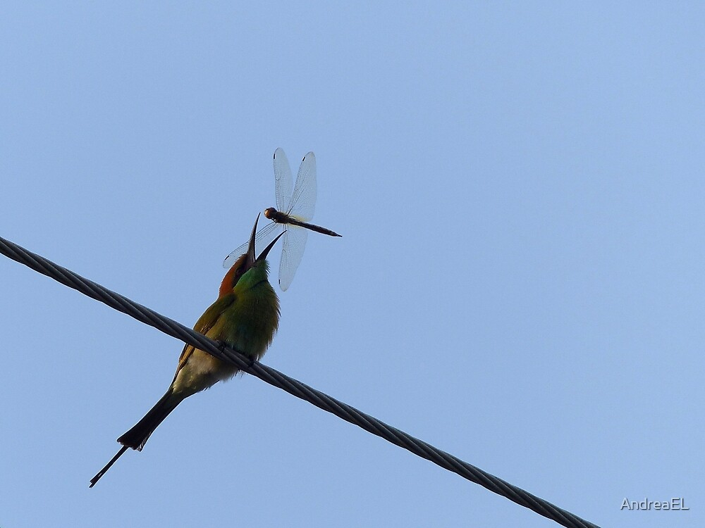 Got Ya!!! - Bee Eater - Dragon Fly - Thailand by AndreaEL