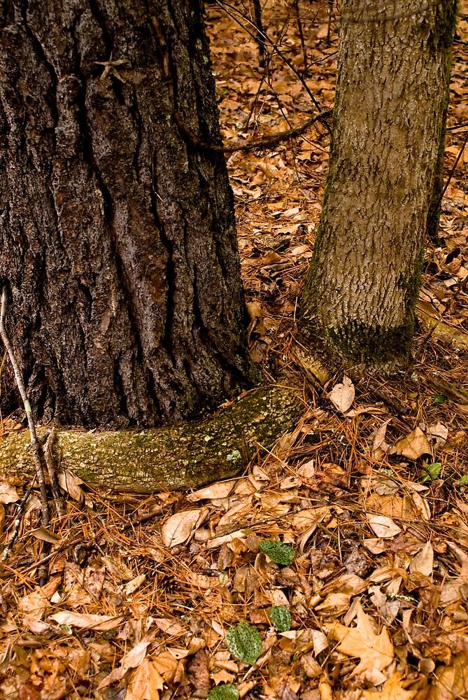 Jennings Creek Series - Root Hug by Rod  Adams