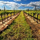 Vineyard by Eve Parry