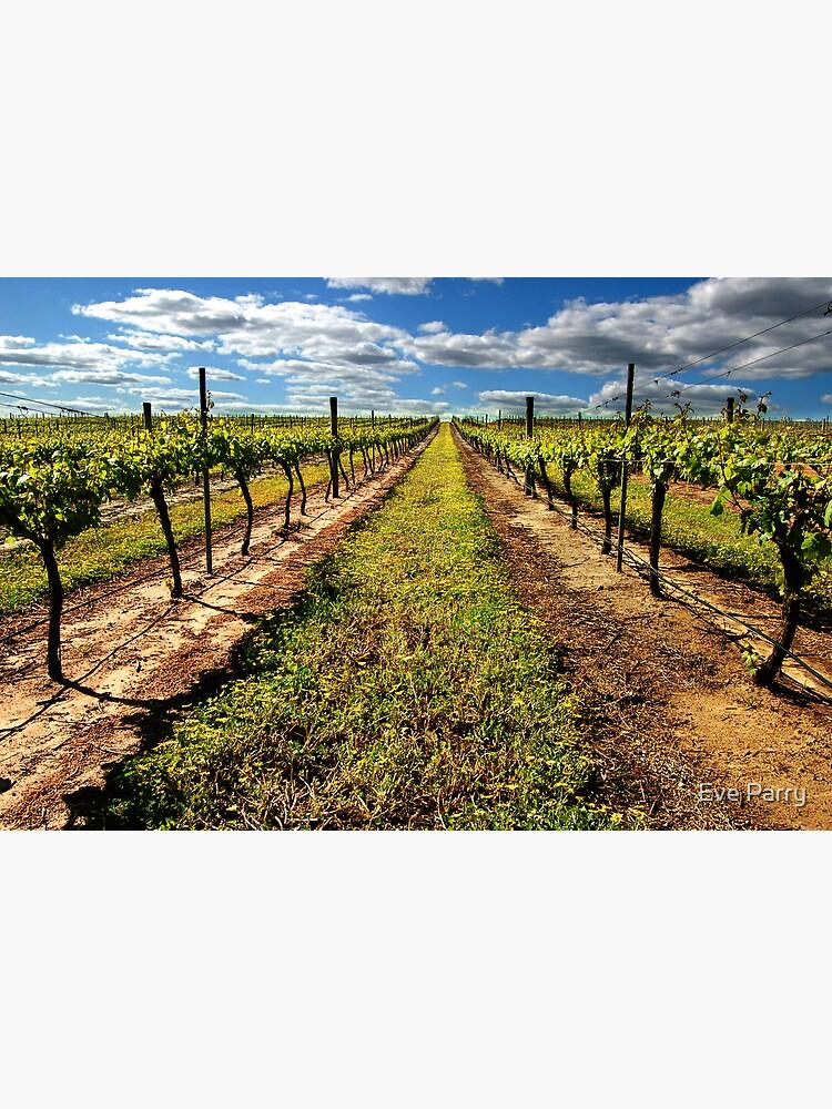 Vineyard by AdamsWife
