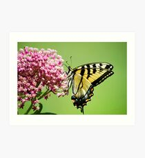 Swallowtail Butterfly Floral Art Print