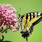 Swallowtail Butterfly Floral by Christina Rollo