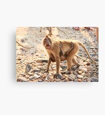 Monkey & Baby  Canvas Print