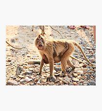 Monkey & Baby  Photographic Print