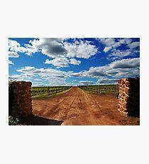 Vineyard # 2  Photographic Print