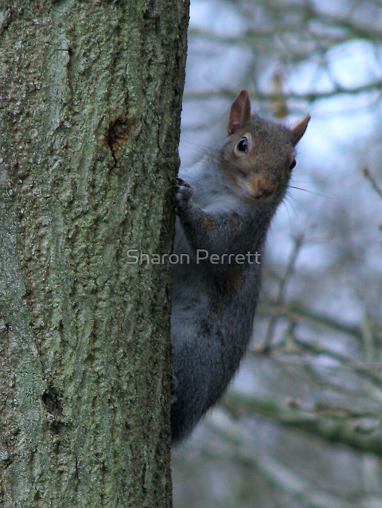 I see you by Sharon Perrett