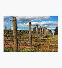 Vineyard # 3 Photographic Print