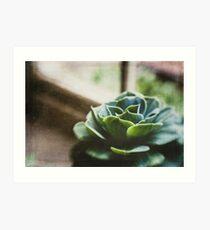 Succulent In The Window Art Print