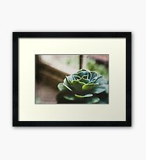 Succulent In The Window Framed Print