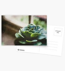 Succulent In The Window Postcards