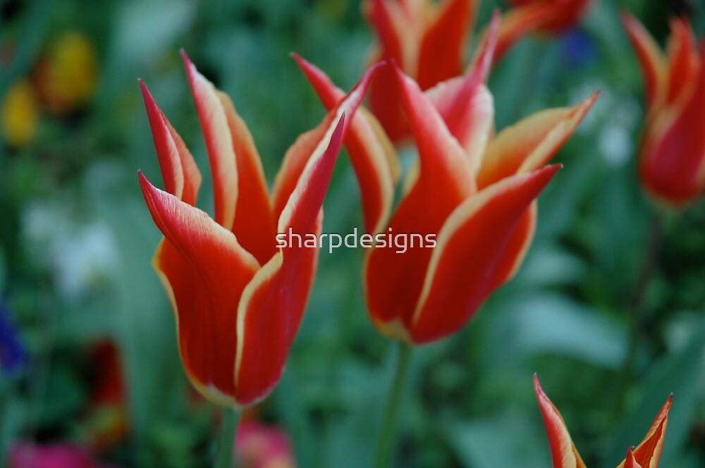 Flowers in Turkey by sharpdesigns