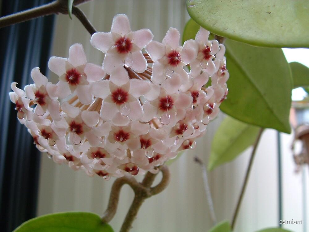 Wet Flower by samiam
