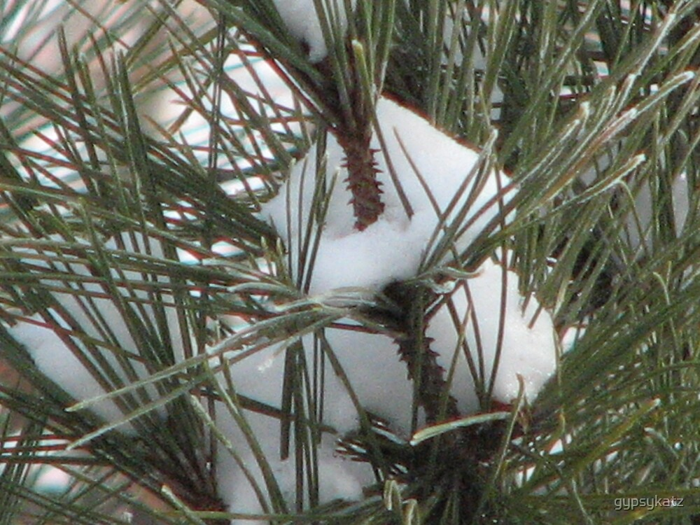 snow in the pines by gypsykatz
