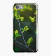 fresh leaves in spring time iPhone Case/Skin