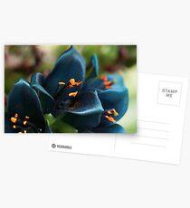 Puya Postcards