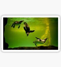 penguins playing underwater Sticker