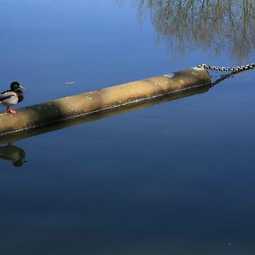 Stour Valley Way: Duck Patrol by RedHillDigital