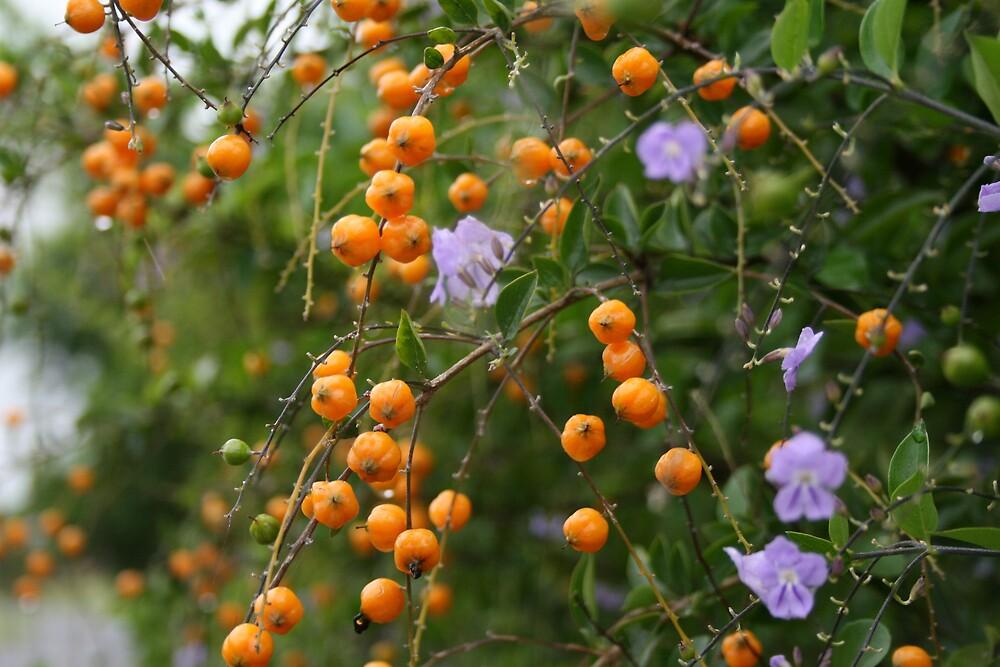 Orange Berries by Norma Blackburn