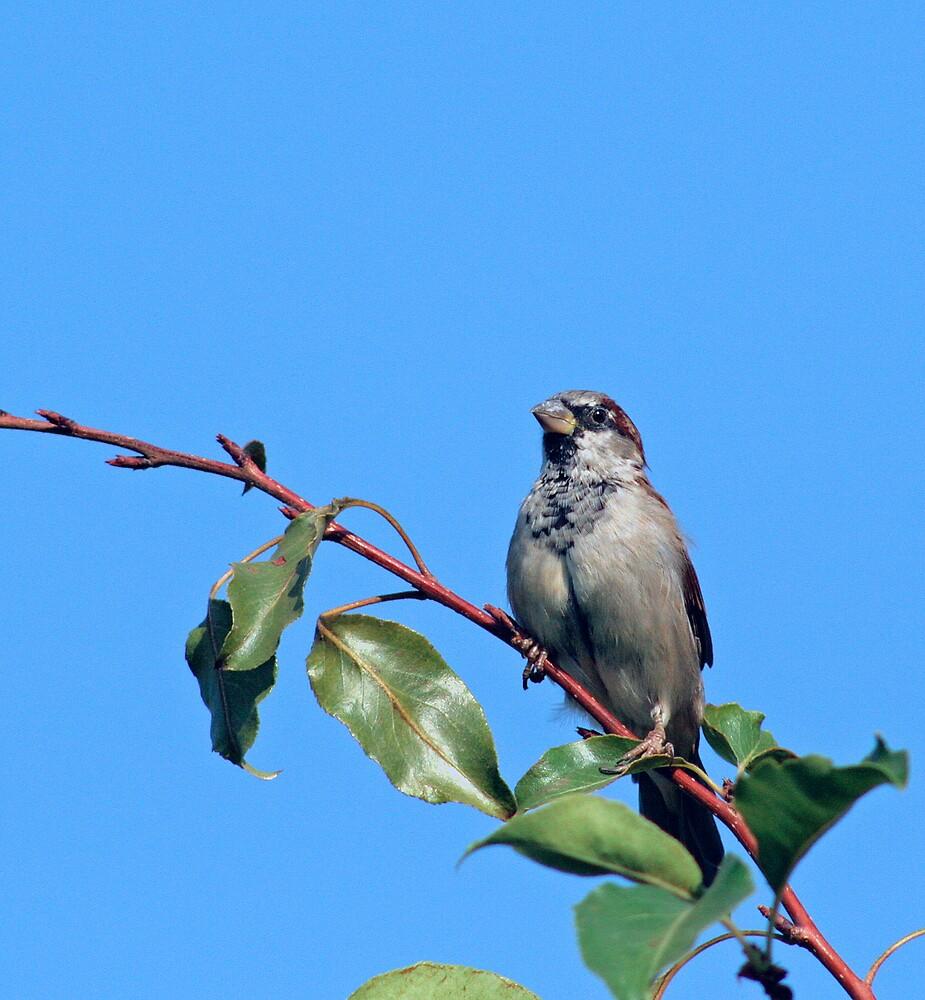 Sparrow in a Tree by Debbie Sickler
