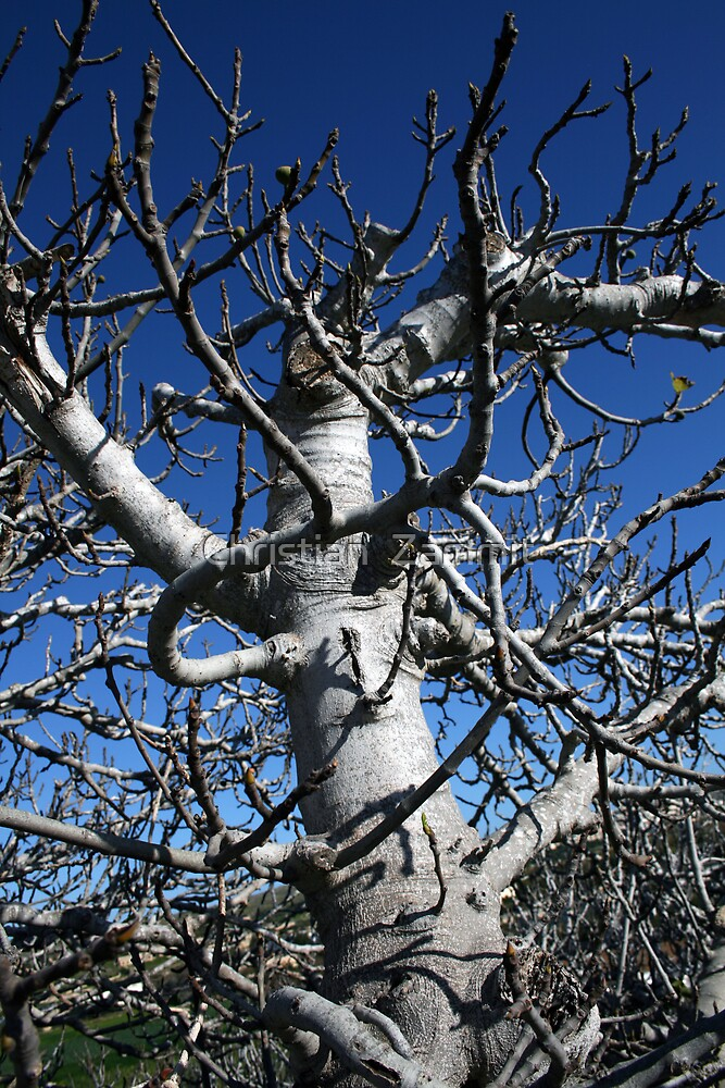 The nude fig tree by Christian  Zammit
