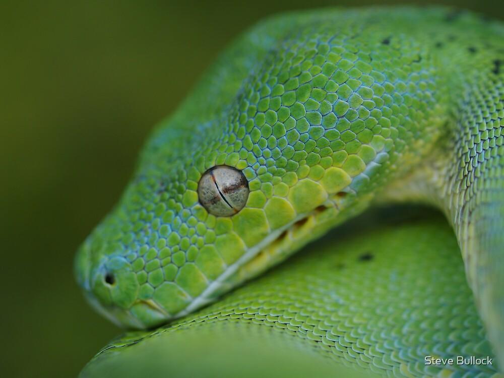 Green Beauty by Steve Bullock
