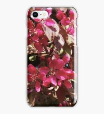 Magenta Blossoms  iPhone Case/Skin